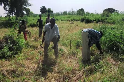 Fonio farmers