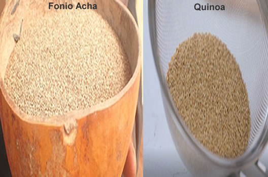 acha fonio vs quinoa nutrition